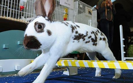 Rabbit-Jumping_1569583c
